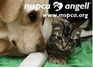 www.mspca.org